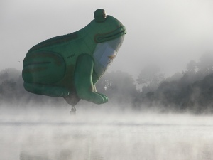 Frog in the fog