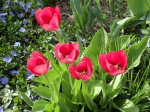 Vicky's Garden