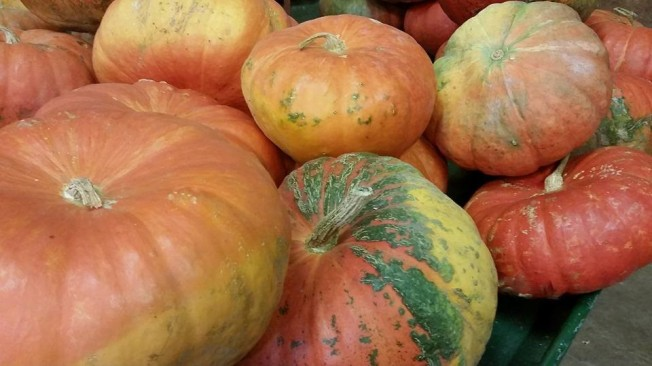 adams-pumpkin-2