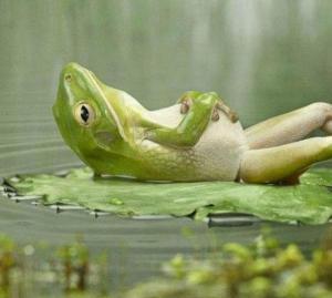 dreamy frog